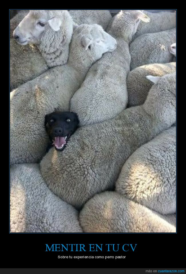ovejas,pastor,perro