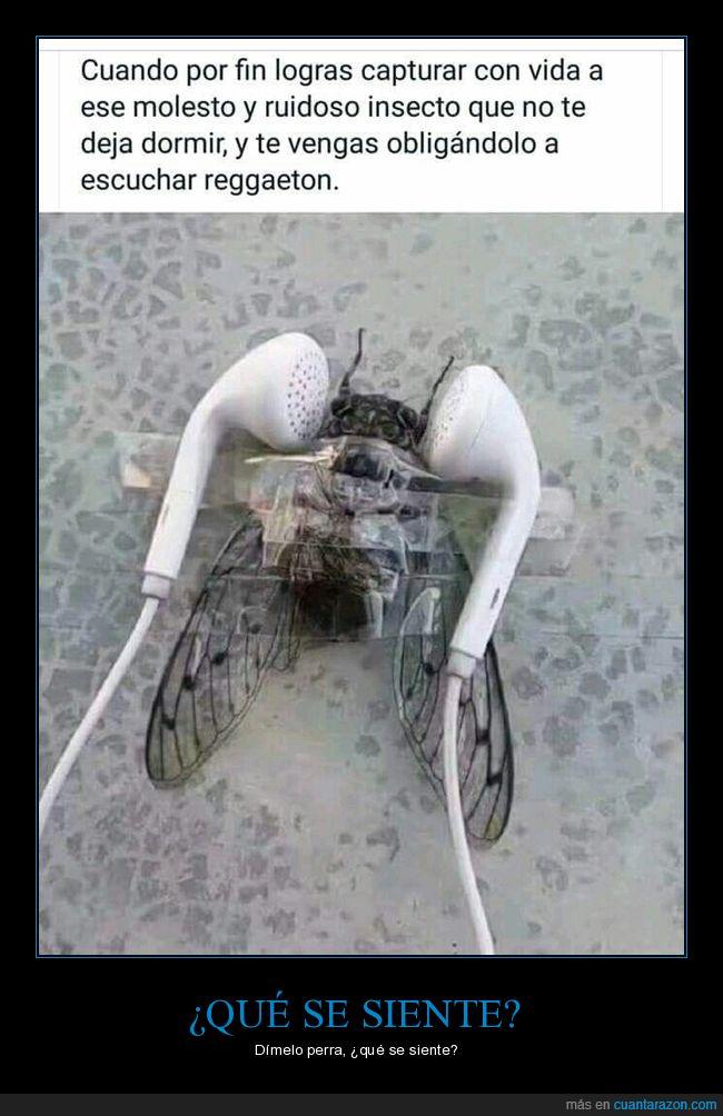 auriculares,mosca,reggaeton,rekesón,ruído