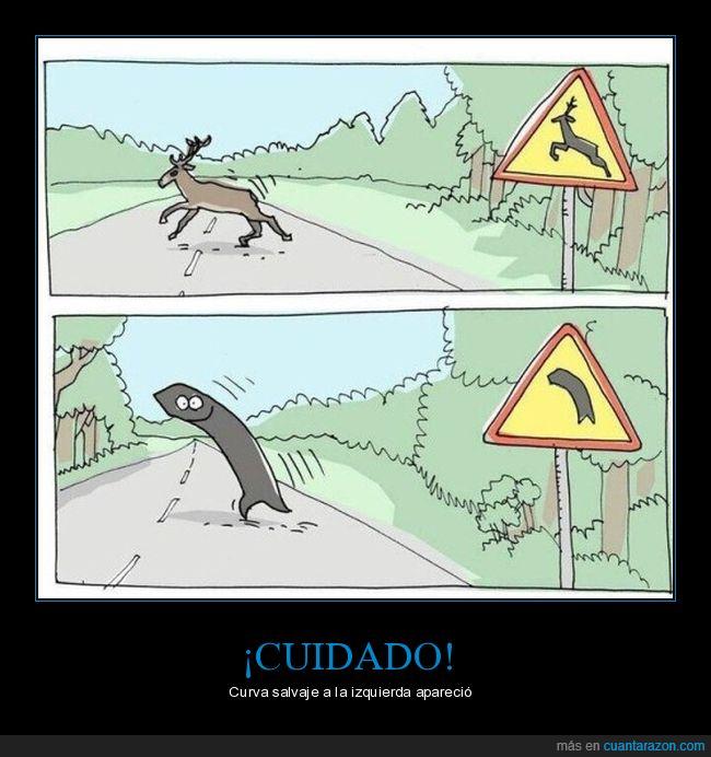 carretera,ciervo,curva