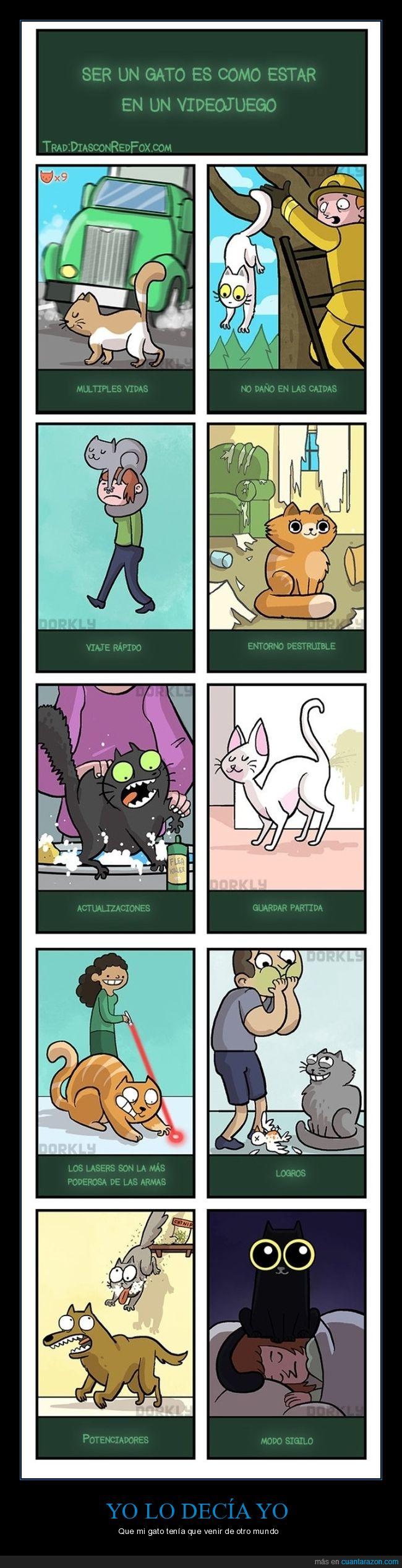 gatos,rpg,videojuegos