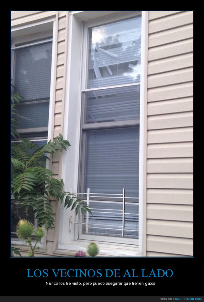 cortinas,gato,persianas,ventana,window blinds