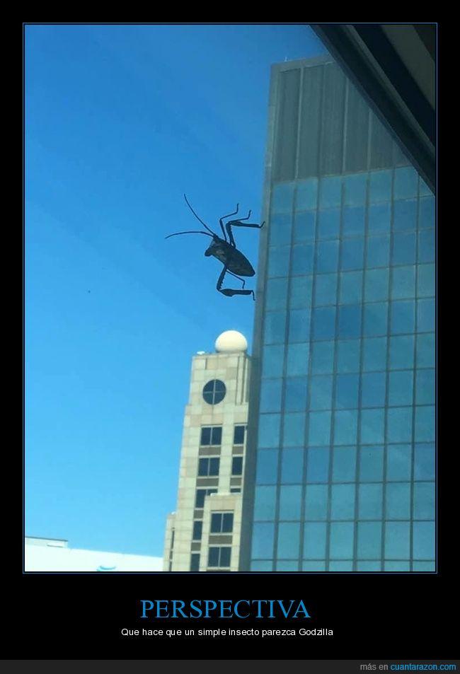 efecto óptico,grande,insecto,ventana