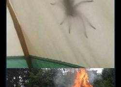 Enlace a Vamos de camping, será divert...