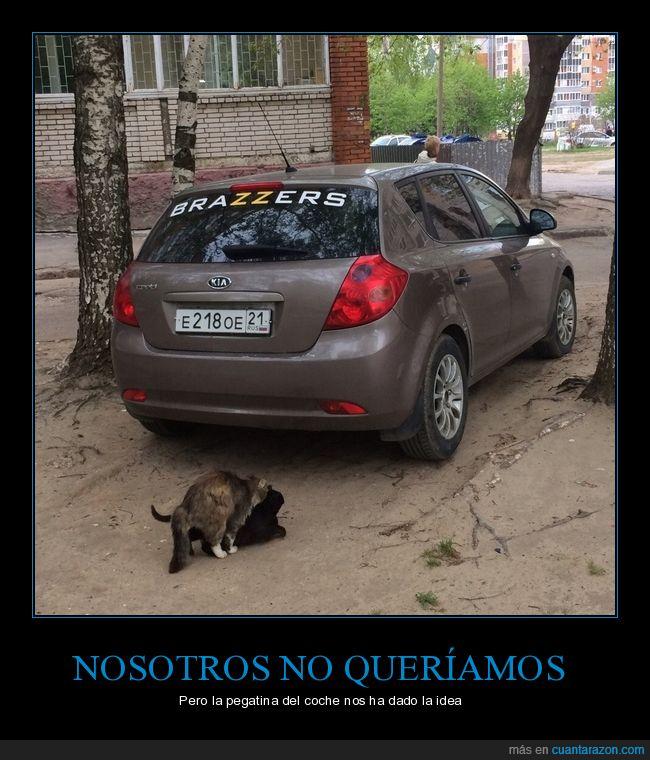 coche,gatos