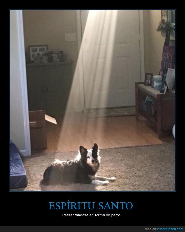 espíritu santo,luz,perro