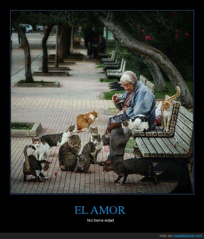 amigos,amor,gatos,mujer