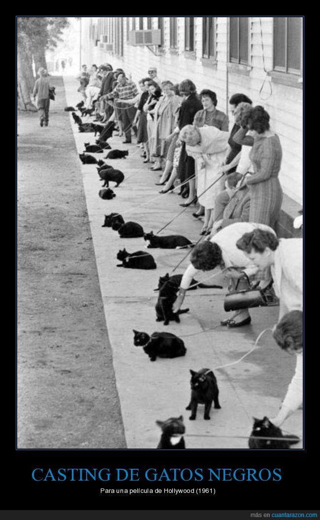casting,gatos,gatos negros