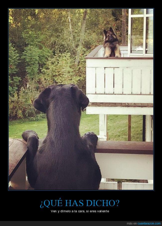 balcones,perros,vacilar