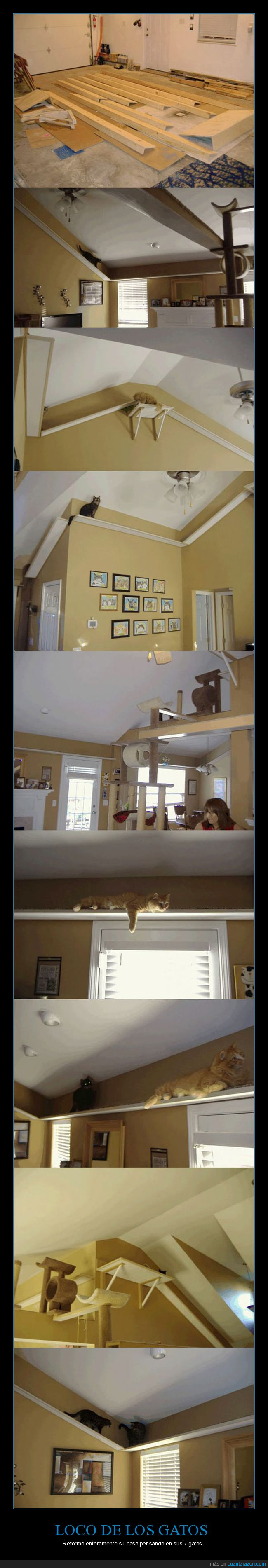 cornisas,gatos,repisas,techo