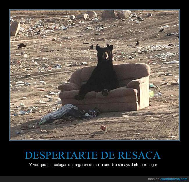 oso,pocilga,porquería,sofá