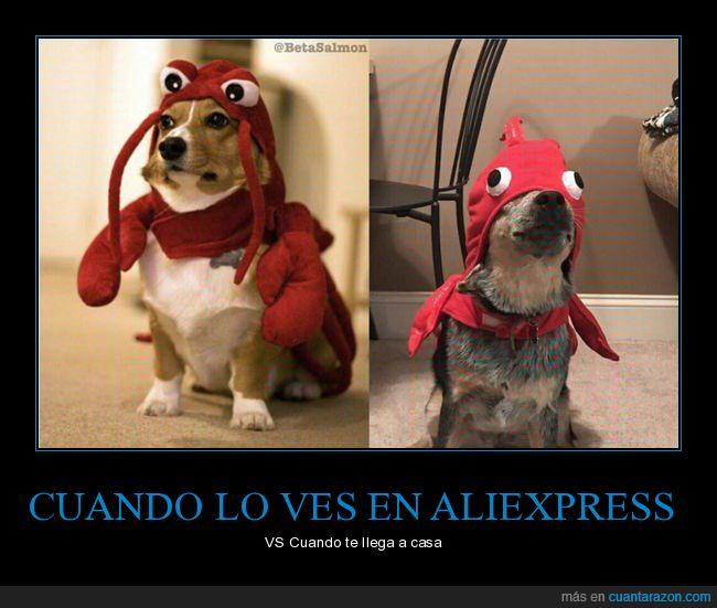 aliexpress,disfraz,perro