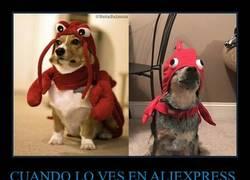Enlace a Hasta al perro le queda mal lo de Aliexpress