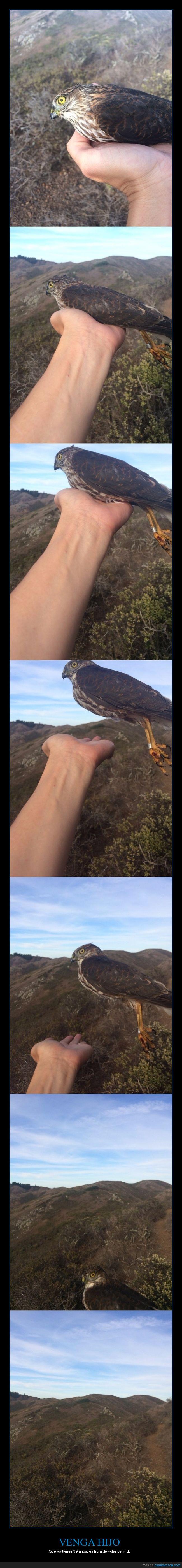 ave,pájaro,volar