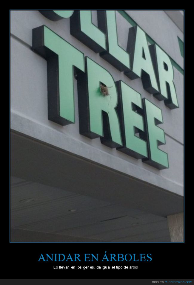 ave,letras,letrero,nido,tree