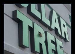 Enlace a Anidar en árboles, lo lleva en los genes