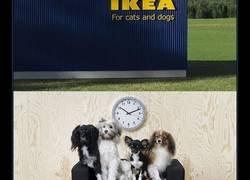 Enlace a IKEA acaba de lanzar una colección de mobiliario para mascotas, y vas a quererlo todo