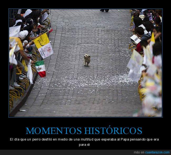 desfile,mexico,perro