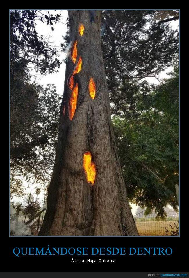 árbol,fuego,napa