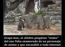 Enlace a La historia del pingüino otaku del zoo Tobu ha tenido un triste final