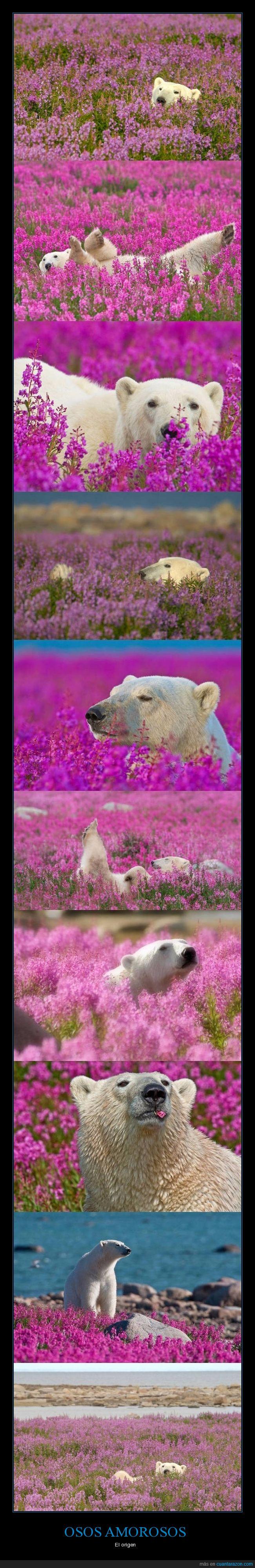 flores,oso