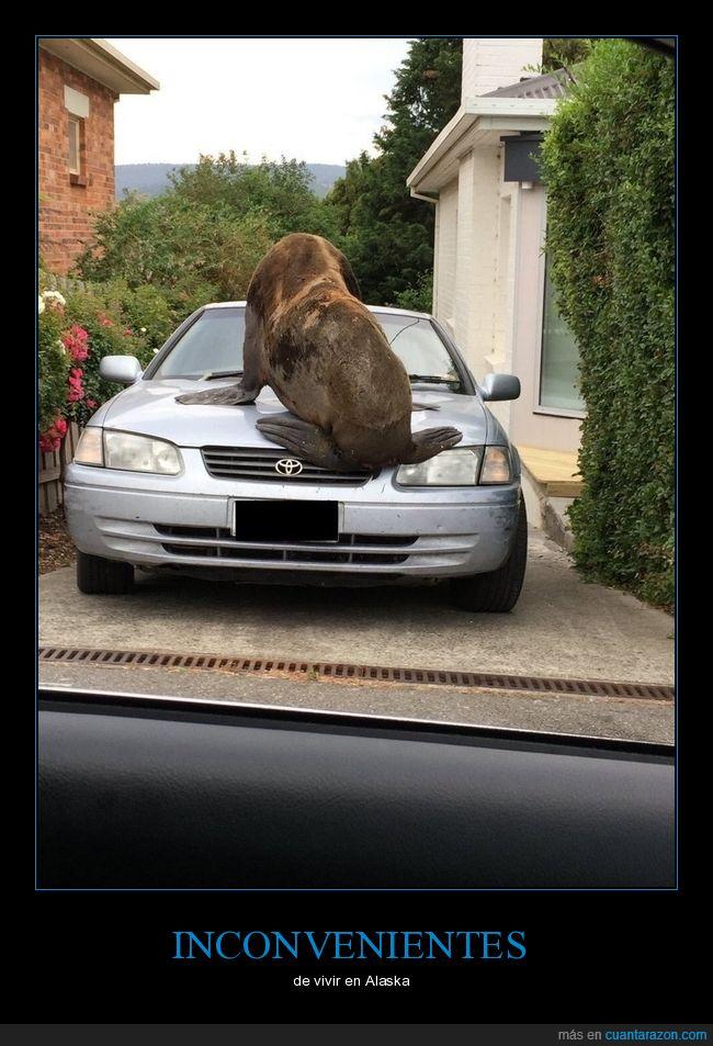 coche,leon marino,Toyota