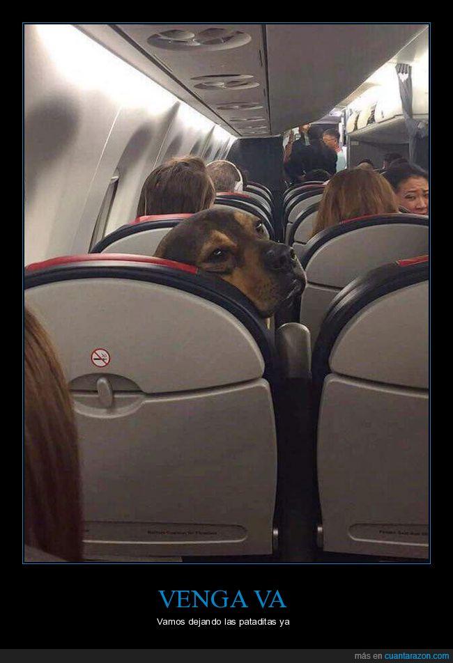 asiento,avión,perro