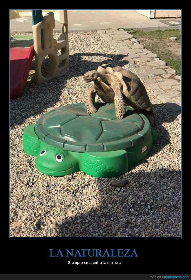 juegos,parque infantil,tortugas
