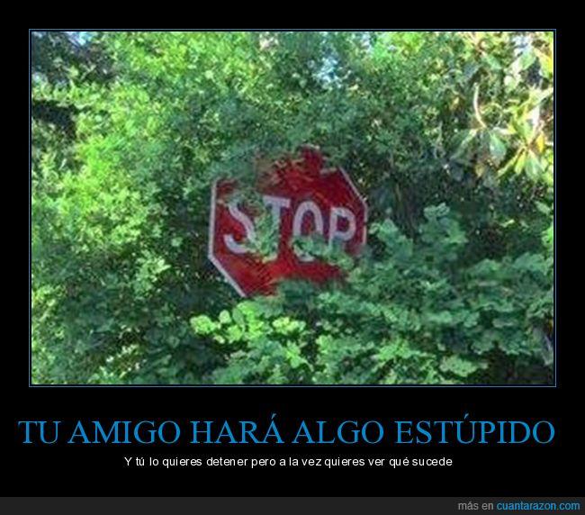 amigo,árboles,señal,stop