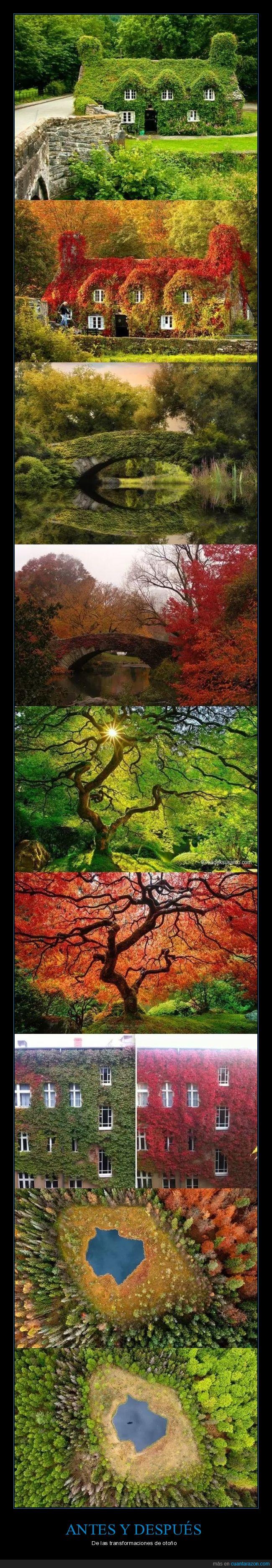 color,otoño,rojizo,verde