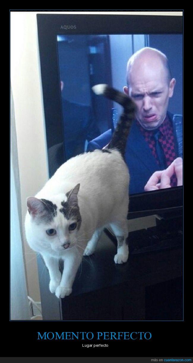 cola,culo,gato,tv
