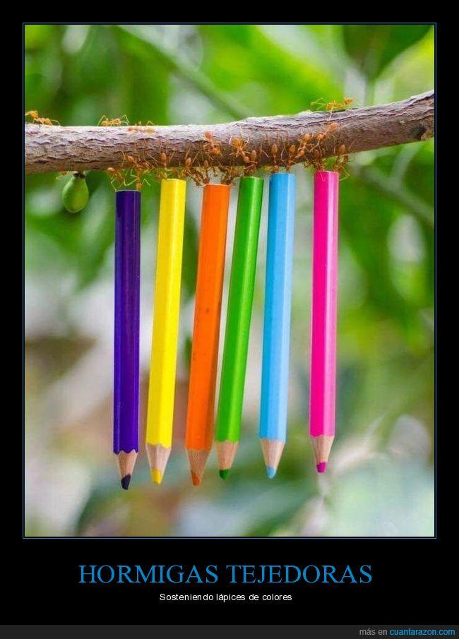 colores,Hormigas tejedoras,Oecophylla