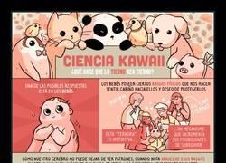 Enlace a ¿Te has dado cuenta que todos los animales bebé son extremadamente monos?