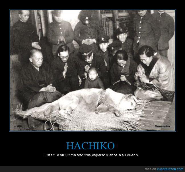 dep,grande,Hachiko,historia,muerte,perro
