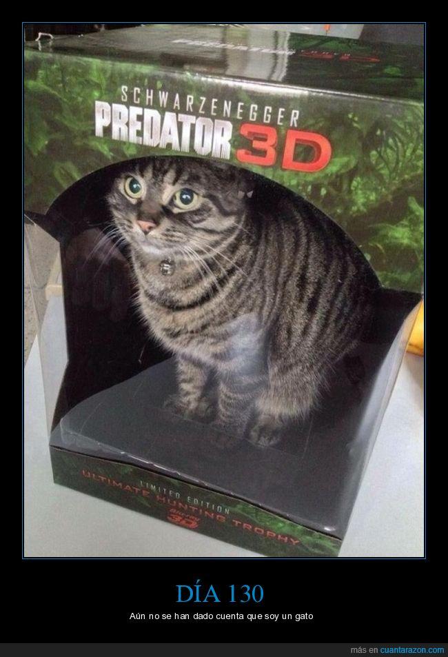 caja,gato,predator 3D