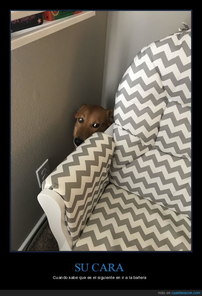 asustado,baño,perro,sofá
