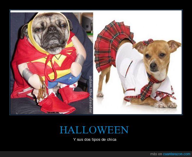 disfraz,halloween,perra,perros