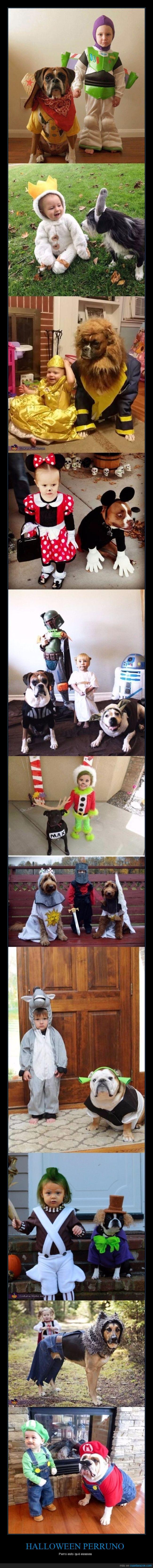 disfraces,halloween,perros