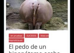 Enlace a Ya sabes, si ves hipopótamos, aléjate