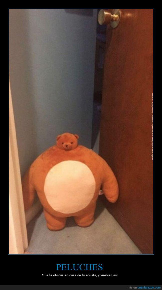 juguete,oso,peluche,plantigrado,puerta