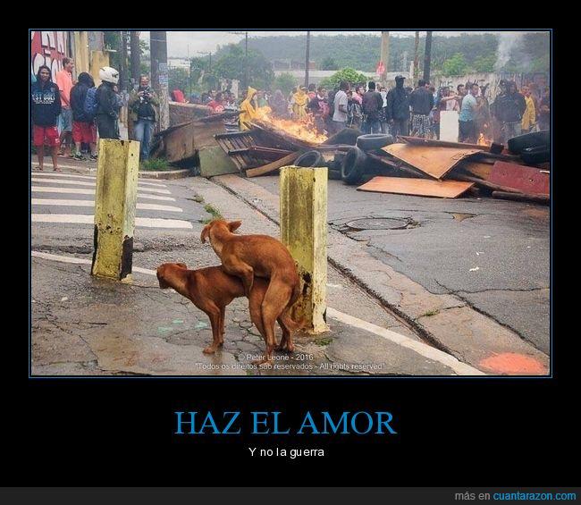 amor,disturbios,guerra,haciéndolo,perros