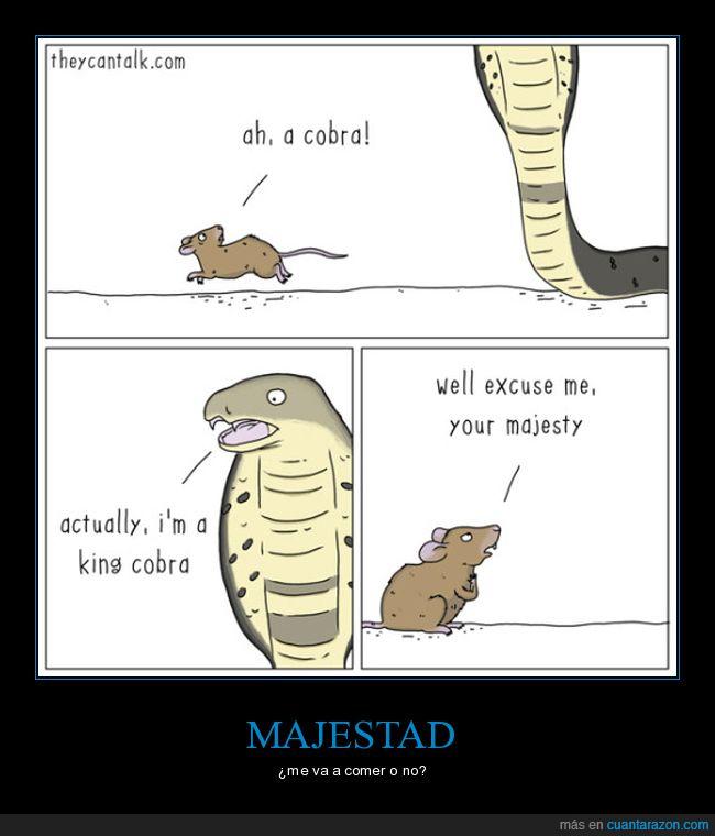 cobra,ratón majestad