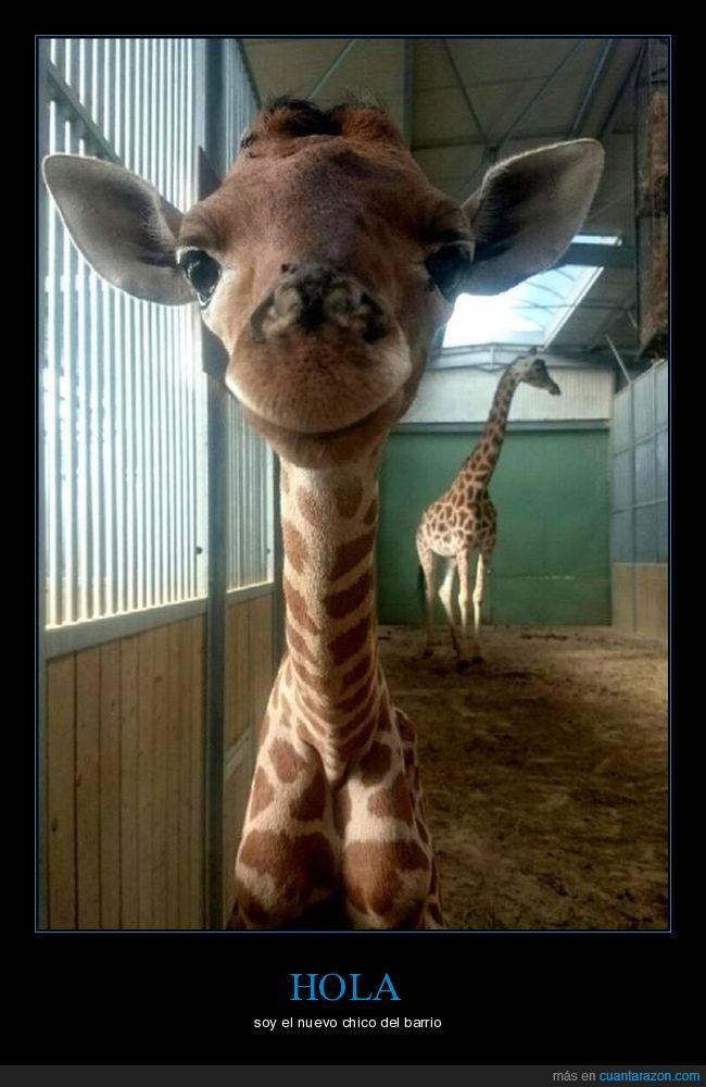 bebè,jirafa