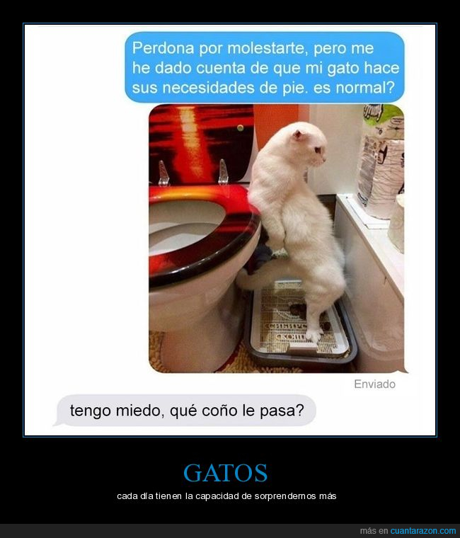de pie,gato,necesitdad