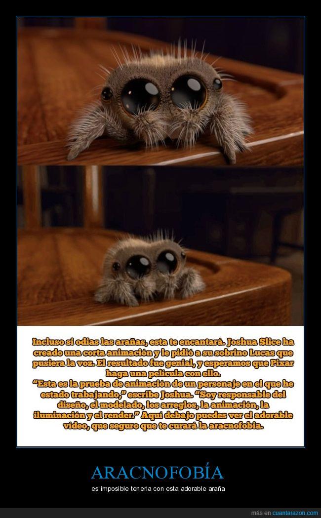 aracnofobia,araña,bonita