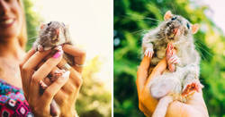 Enlace a Ex-ratas de laboratorio salen a la luz del día por primera vez en su vida y sus expresiones lo dicen todo