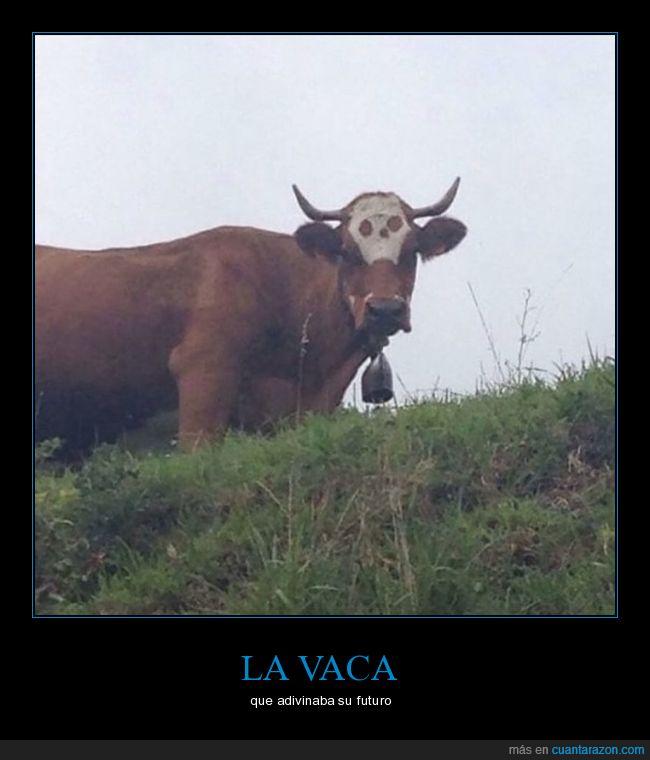 calavera,vaca