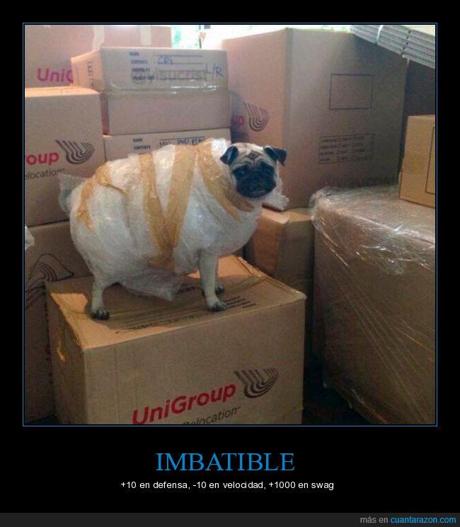 papel de burbujas,perro