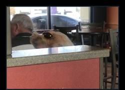 Enlace a No es un perro con gafas es pelo de señora