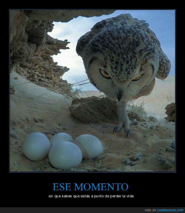 crias,huevos,lechuza