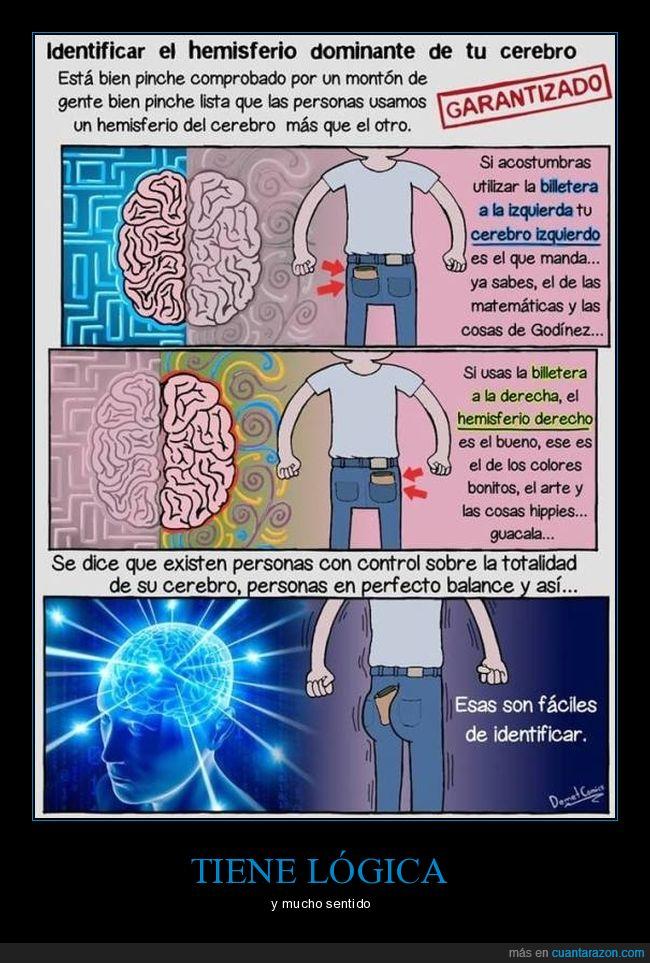 cerebro,derecho,hemisferio,izquierdo